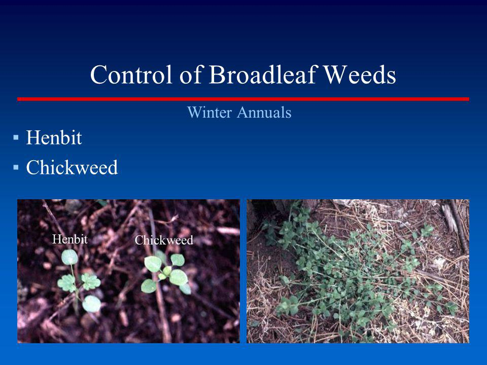 Control of Broadleaf Weeds
