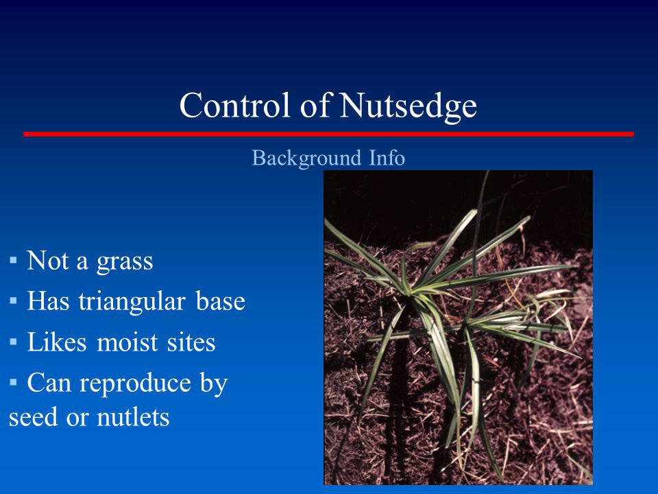 Control of Nutsedge Not a grass Has triangular base Likes moist sites