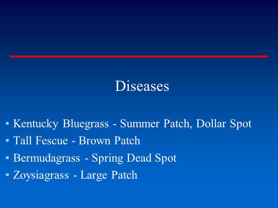 Diseases Kentucky Bluegrass - Summer Patch, Dollar Spot