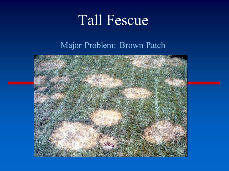 Major Problem: Brown Patch