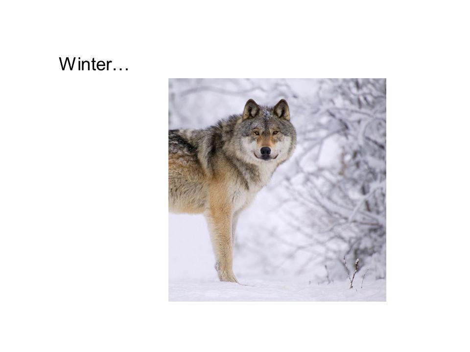 Winter…