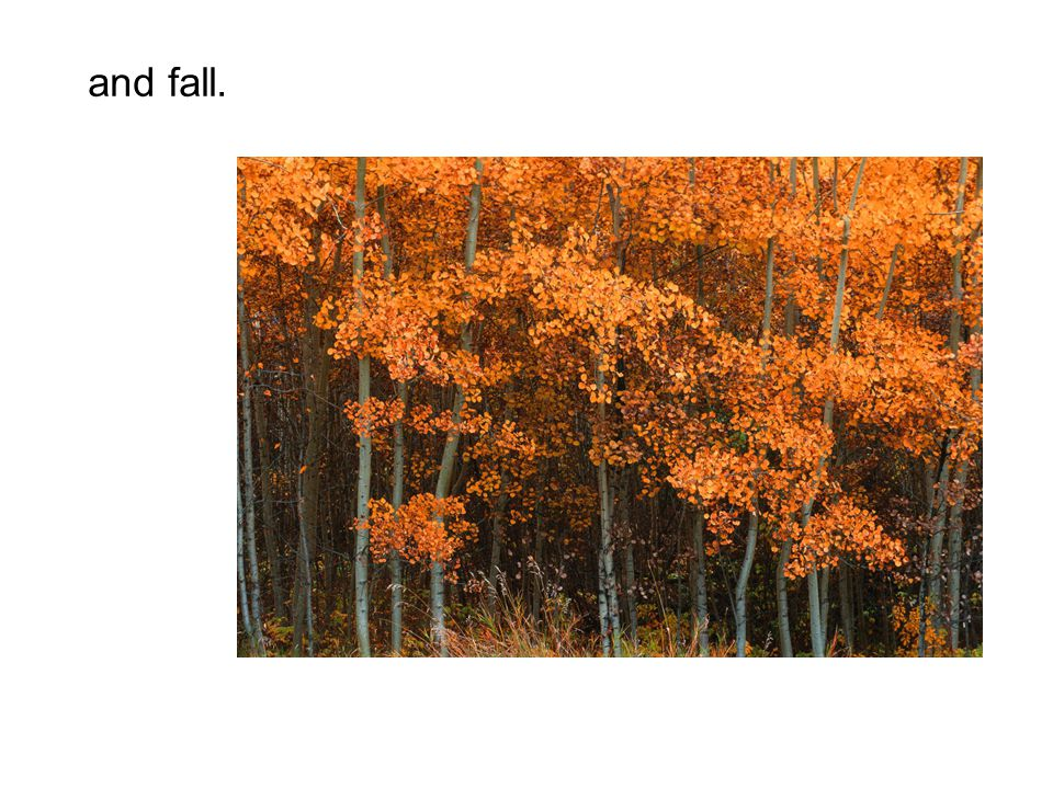 and fall.