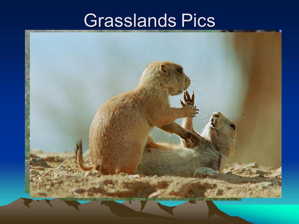 Grasslands Pics