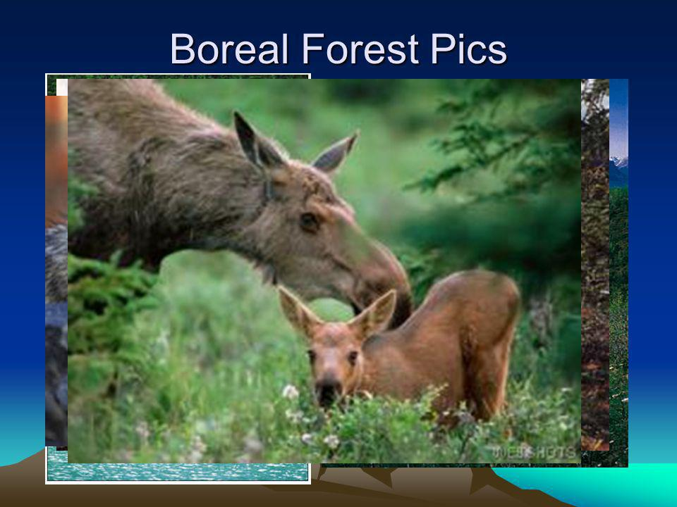 Boreal Forest Pics
