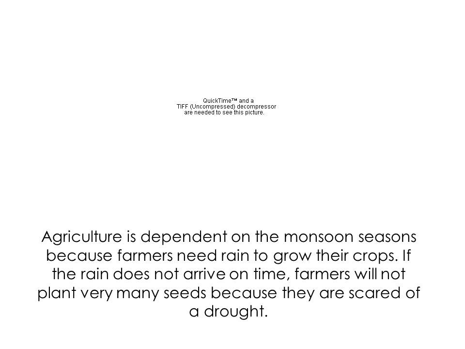 Agriculture is dependent on the monsoon seasons because farmers need rain to grow their crops. If the rain does not arrive on time, farmers will not plant very many seeds because they are scared of a drought.