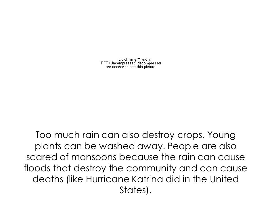 Too much rain can also destroy crops. Young plants can be washed away