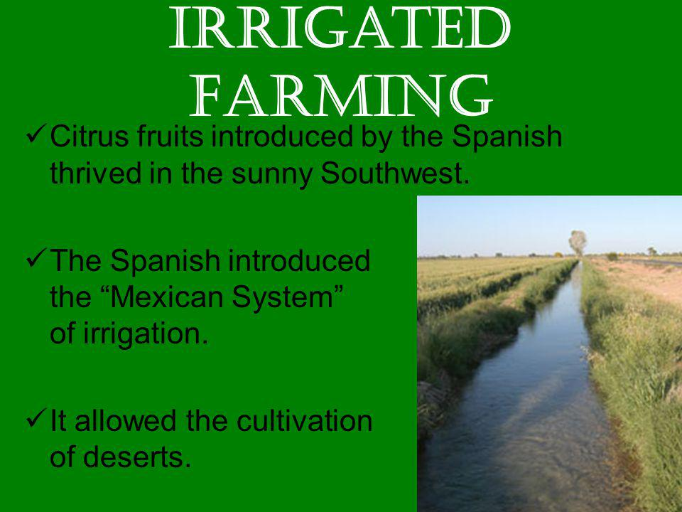 Irrigated Farming Citrus fruits introduced by the Spanish thrived in the sunny Southwest.