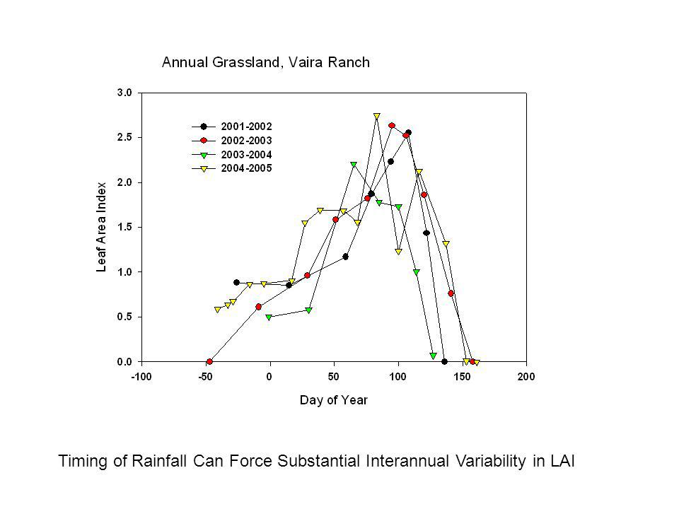 Timing of Rainfall Can Force Substantial Interannual Variability in LAI