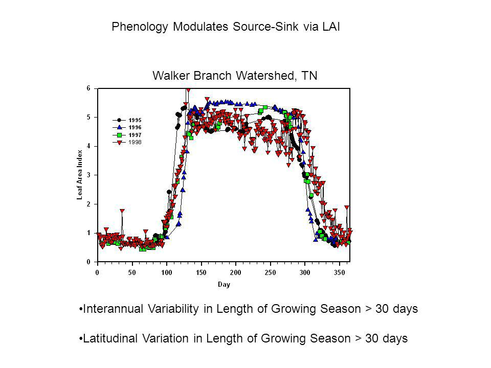 Phenology Modulates Source-Sink via LAI