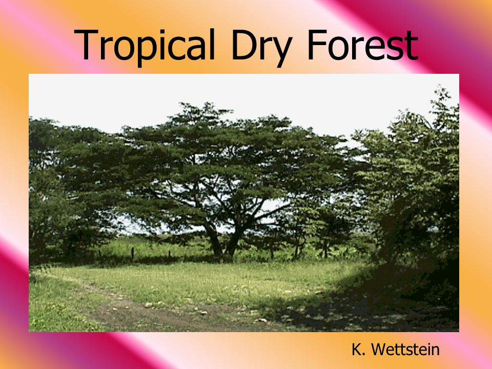 Tropical Dry Forest K. Wettstein