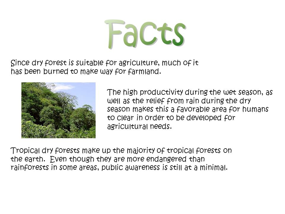 Facts Since dry forest is suitable for agriculture, much of it has been burned to make way for farmland.