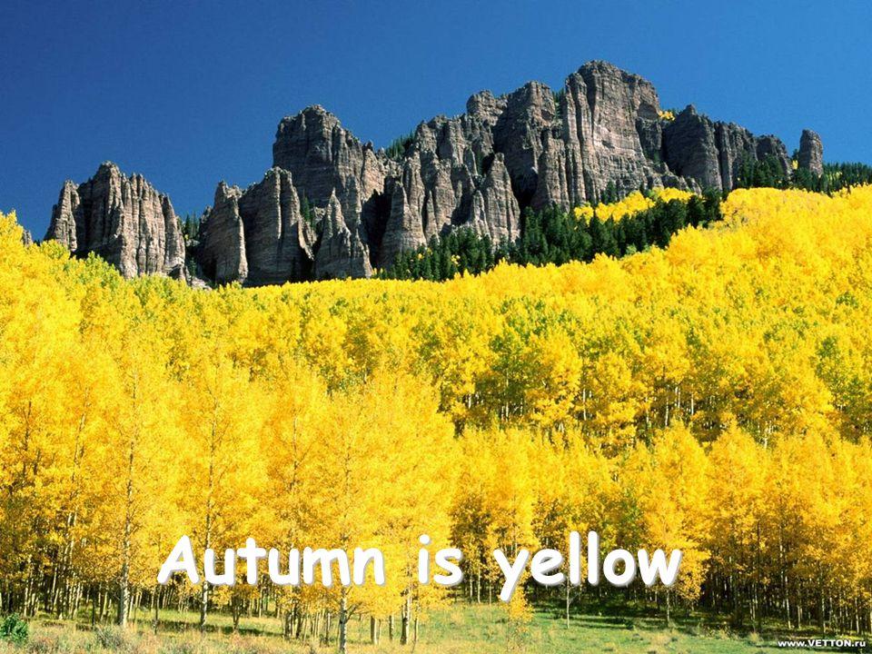 Autumn is yellow