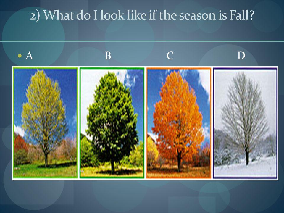 2) What do I look like if the season is Fall