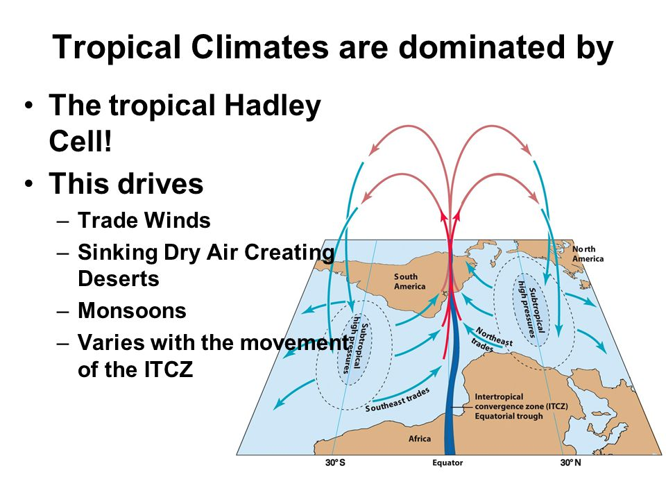 Tropical Climates are dominated by