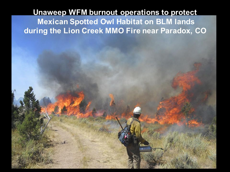 Unaweep WFM burnout operations to protect Mexican Spotted Owl Habitat on BLM lands during the Lion Creek MMO Fire near Paradox, CO
