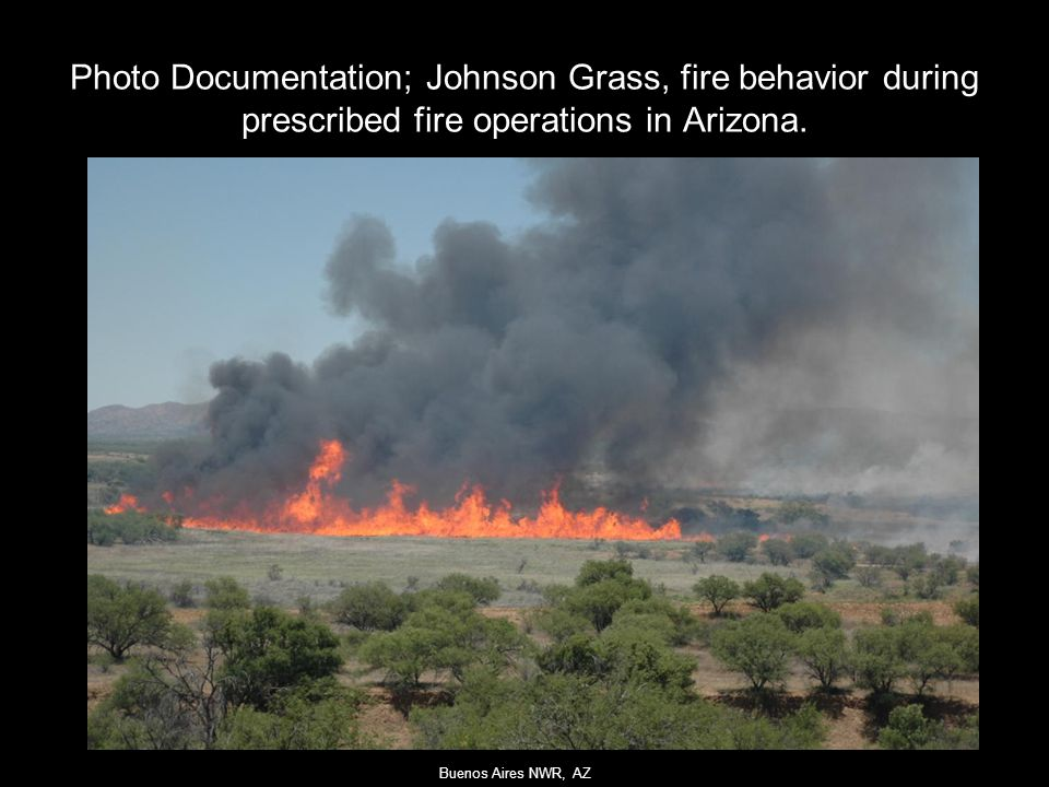 Photo Documentation; Johnson Grass, fire behavior during prescribed fire operations in Arizona.