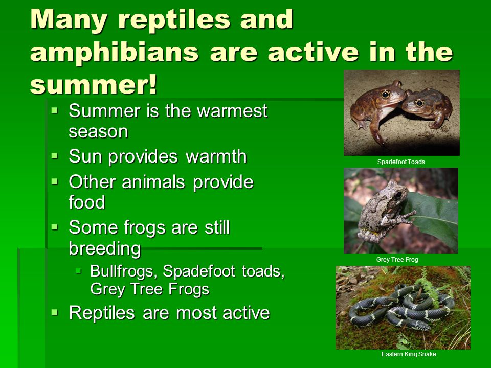 Many reptiles and amphibians are active in the summer!