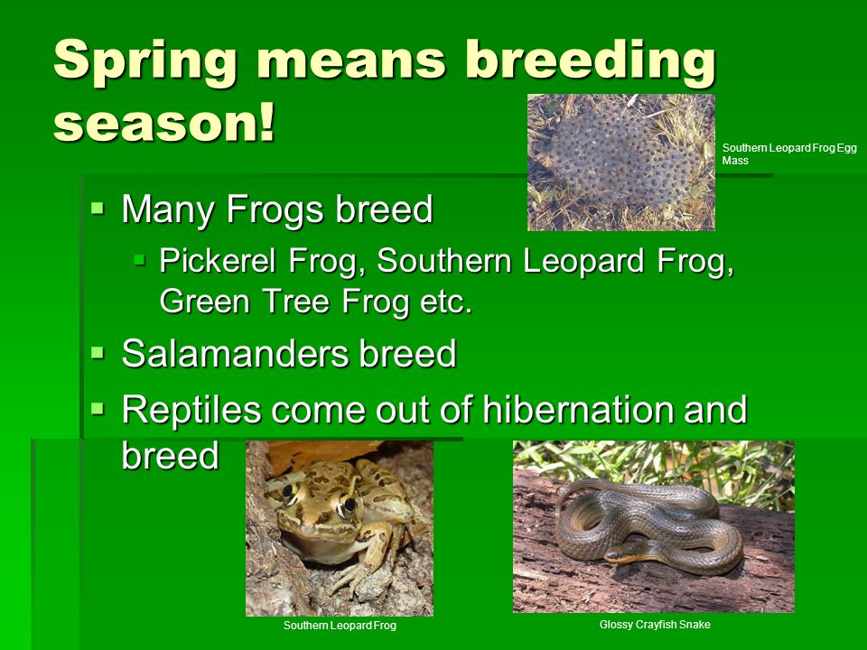 Spring means breeding season!