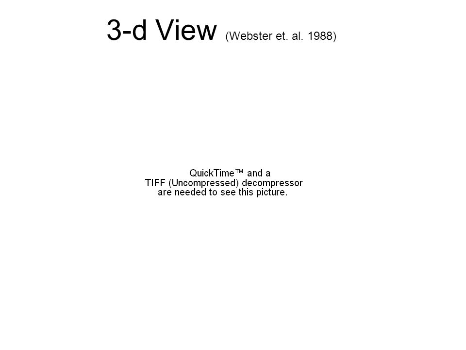 3-d View (Webster et. al. 1988)
