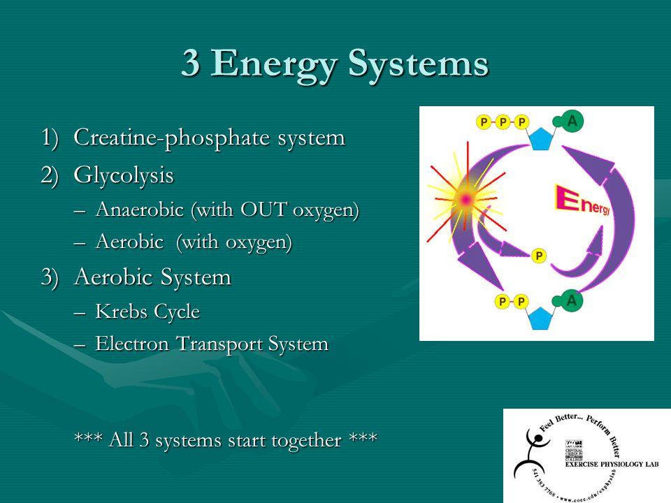 3 Energy Systems 1) Creatine-phosphate system 2) Glycolysis