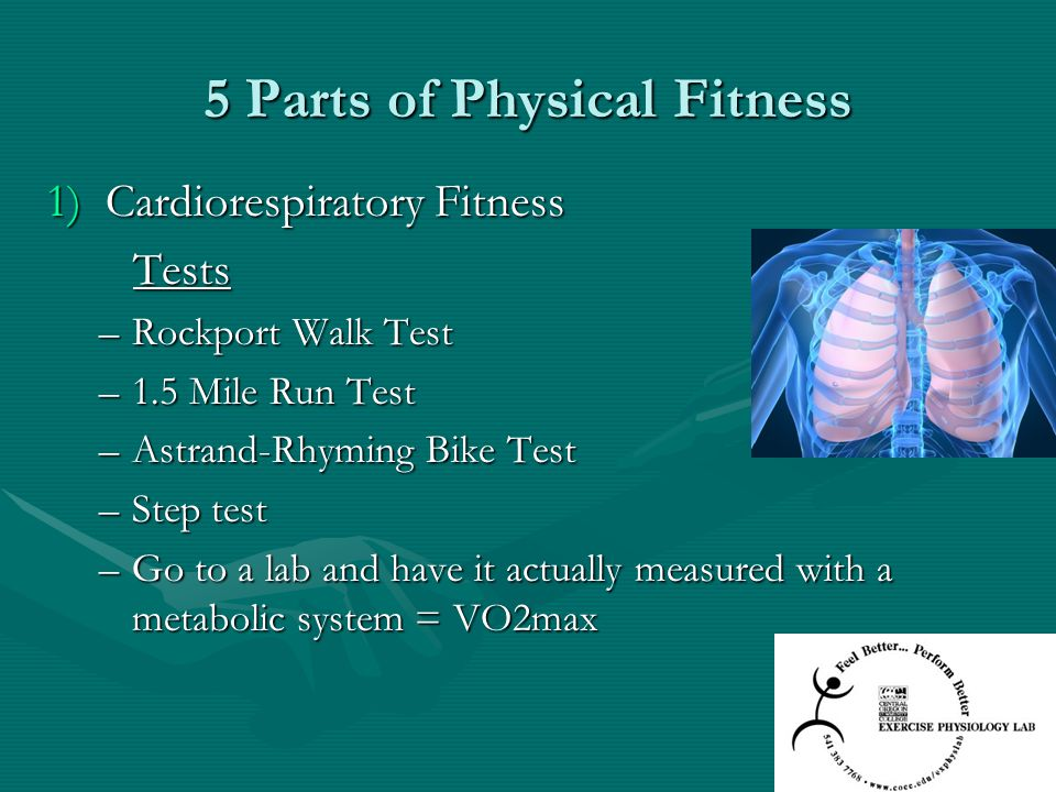 5 Parts of Physical Fitness