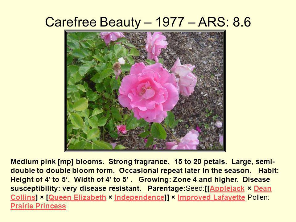 Carefree Beauty – 1977 – ARS: 8.6
