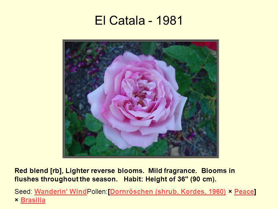 El Catala This variety was named for Buck's friend Pedro Dot who hailed from Catalonia, Spain.