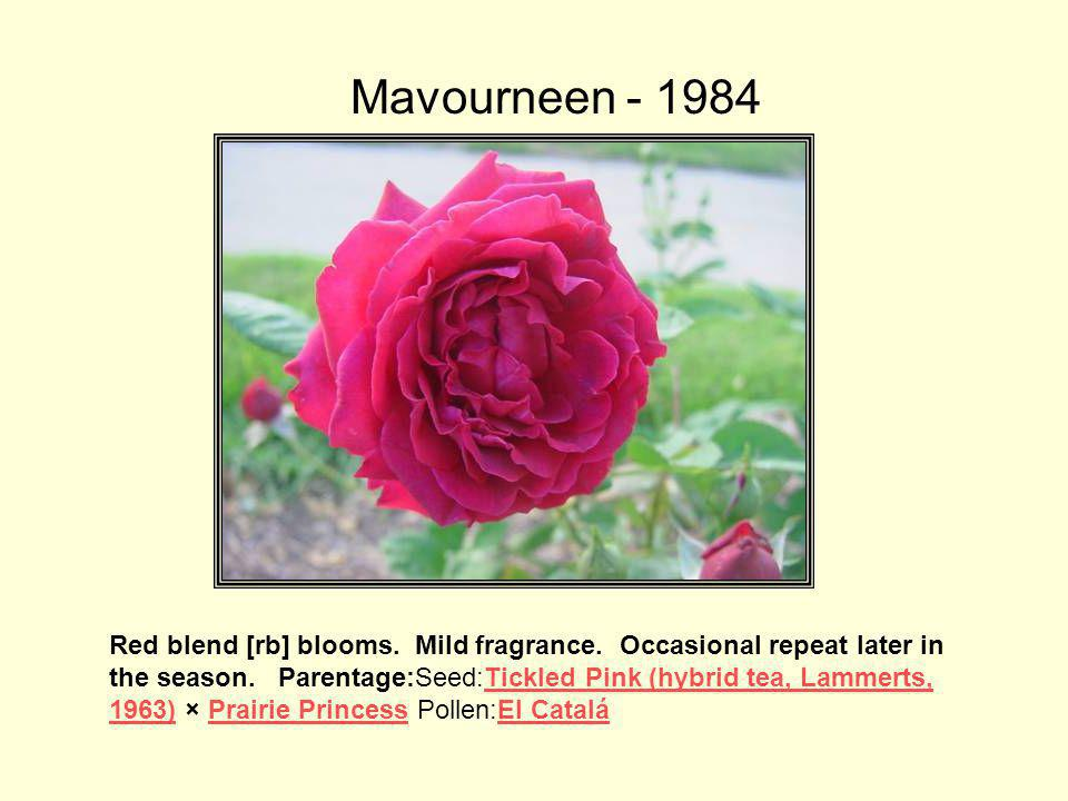 Mavourneen - 1984 This rose was named for 'Griff's' wife, Mary and is a seedling of El Catala.