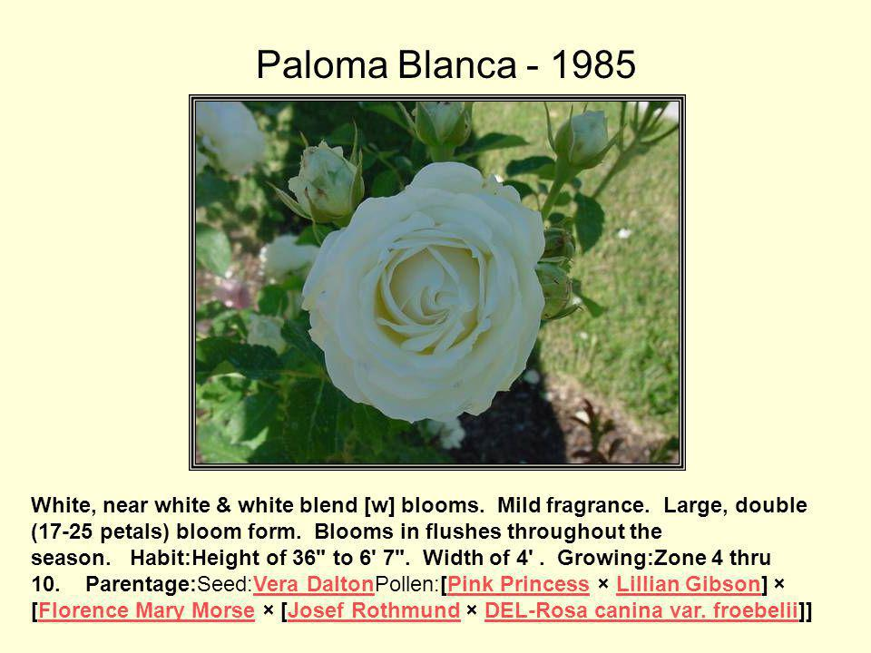 Paloma Blanca This variety is registered as a grandiflora.