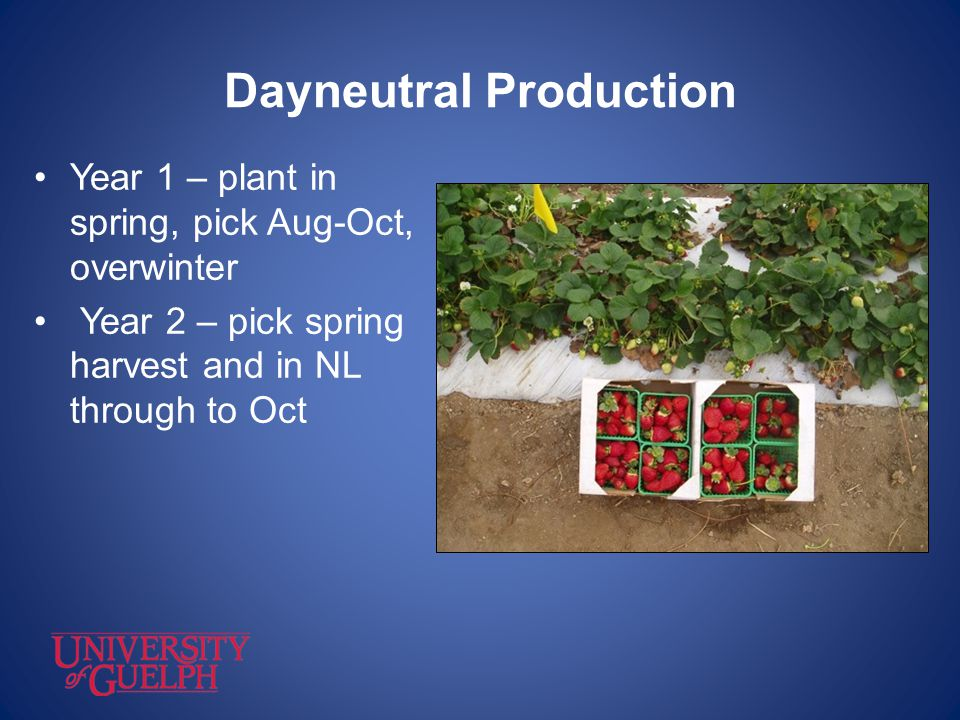 Dayneutral Production