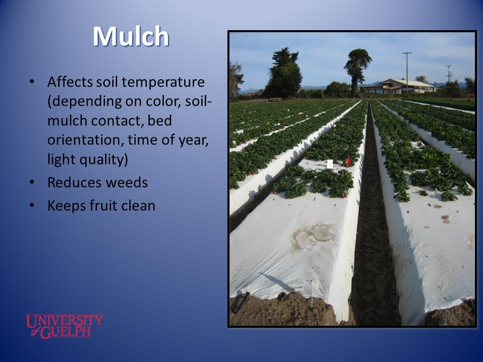 Mulch Affects soil temperature (depending on color, soil-mulch contact, bed orientation, time of year, light quality)