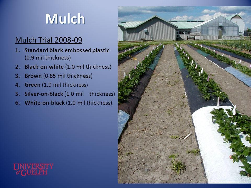 Mulch Mulch Trial Standard black embossed plastic (0.9 mil thickness) Black-on-white (1.0 mil thickness)