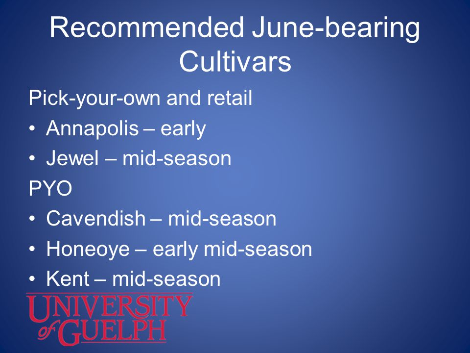 Recommended June-bearing Cultivars