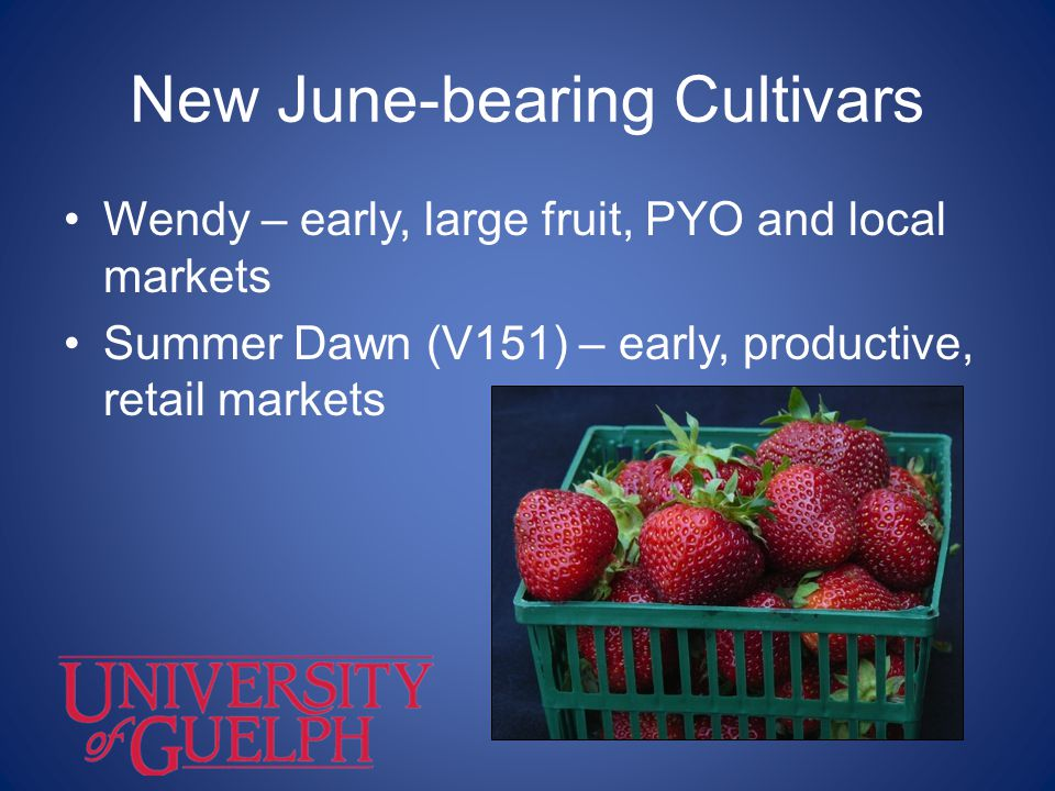 New June-bearing Cultivars
