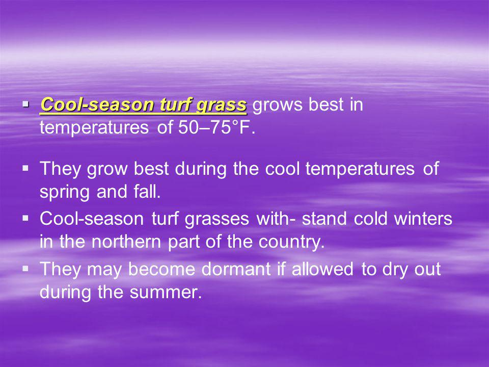 Cool-season turf grass grows best in temperatures of 50–75°F.