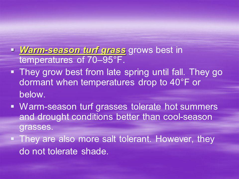 Warm-season turf grass grows best in temperatures of 70–95°F.