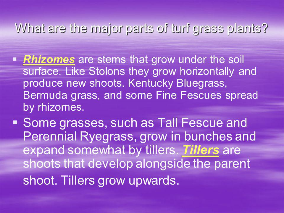 What are the major parts of turf grass plants
