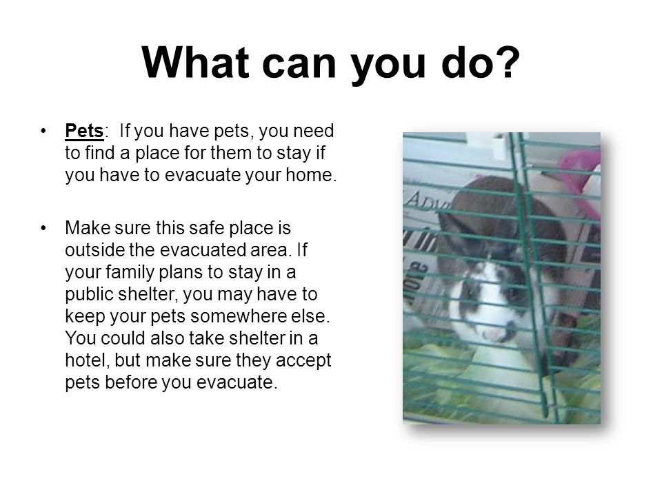 What can you do Pets: If you have pets, you need to find a place for them to stay if you have to evacuate your home.