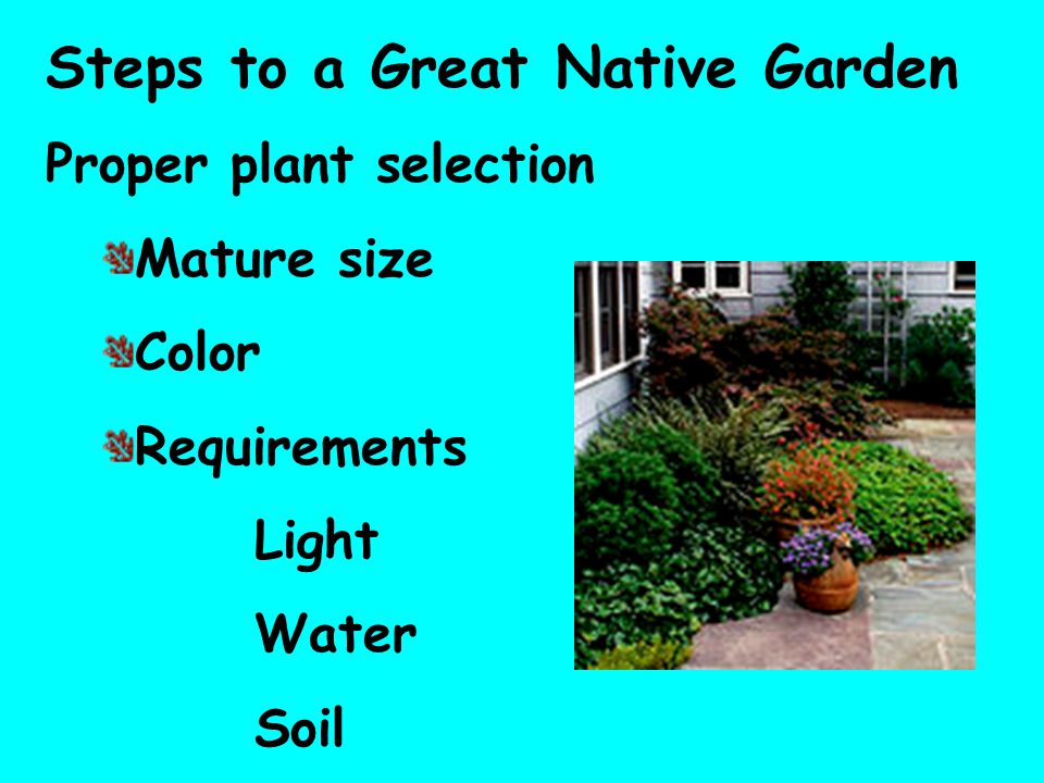 Steps to a Great Native Garden