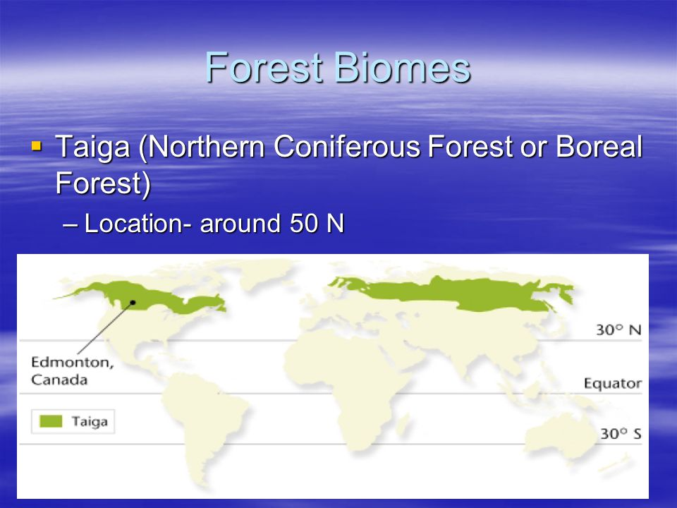 Forest Biomes Taiga (Northern Coniferous Forest or Boreal Forest)