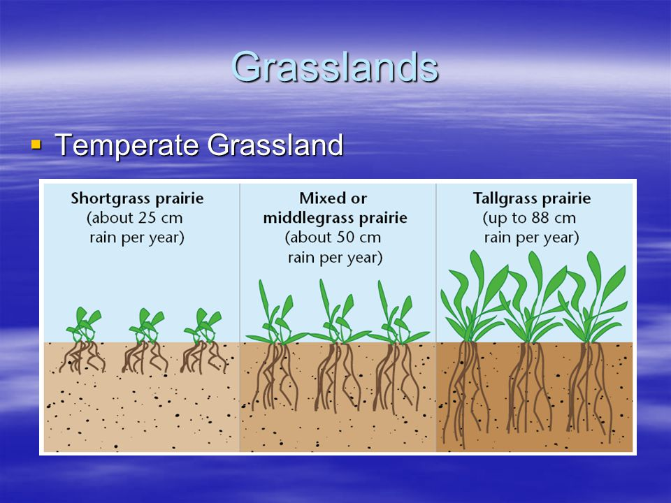 Grasslands Temperate Grassland