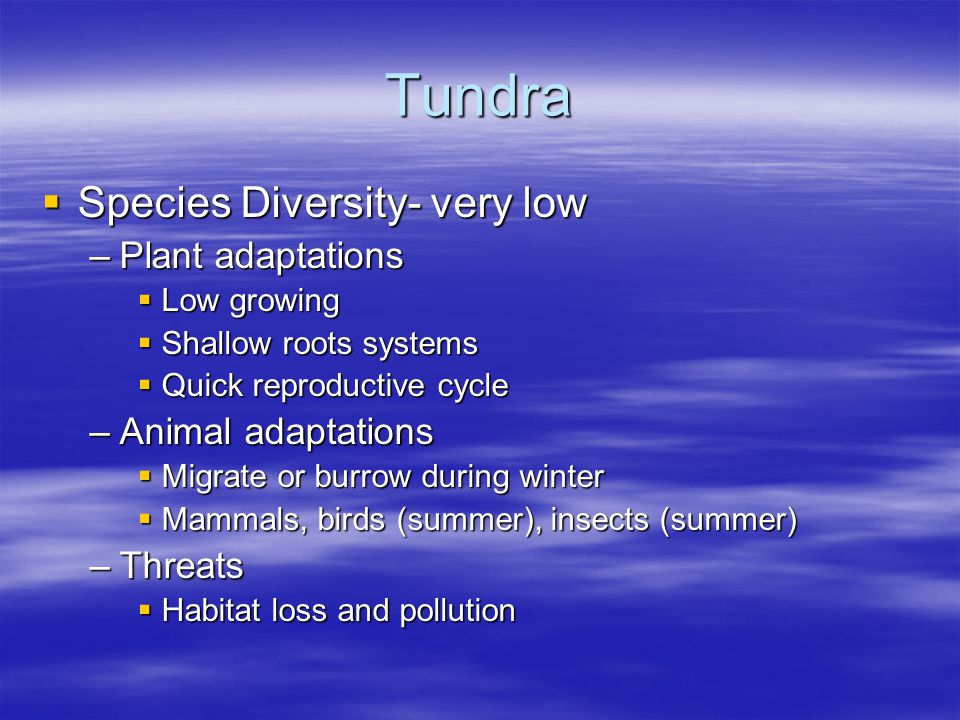 Tundra Species Diversity- very low Plant adaptations