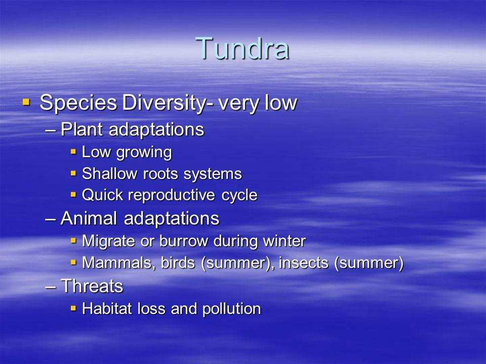 Tundra Species Diversity- very low Plant adaptations