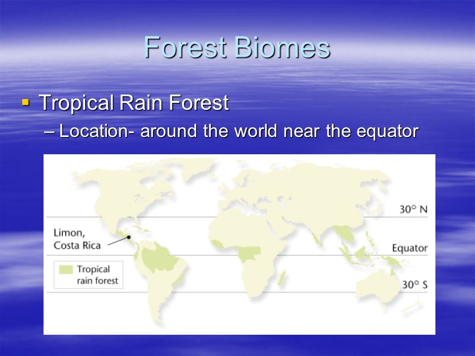 Forest Biomes Tropical Rain Forest