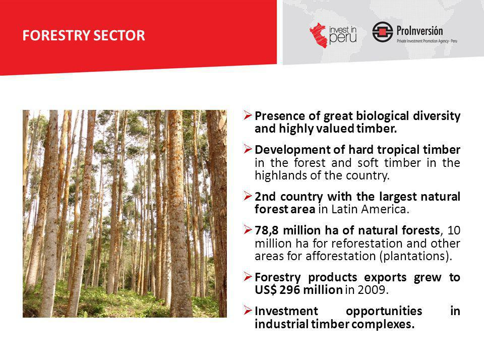 FORESTRY SECTOR Presence of great biological diversity and highly valued timber.