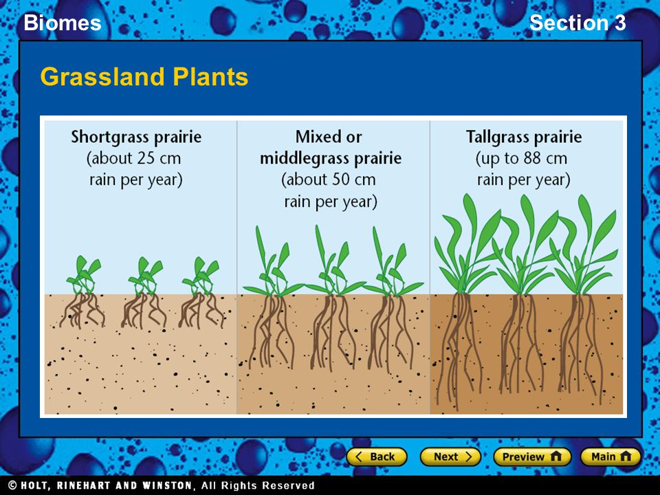 Grassland Plants
