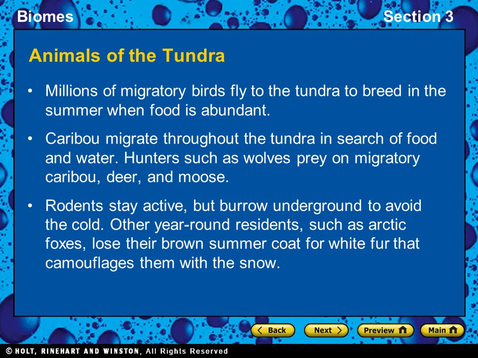 Animals of the Tundra Millions of migratory birds fly to the tundra to breed in the summer when food is abundant.