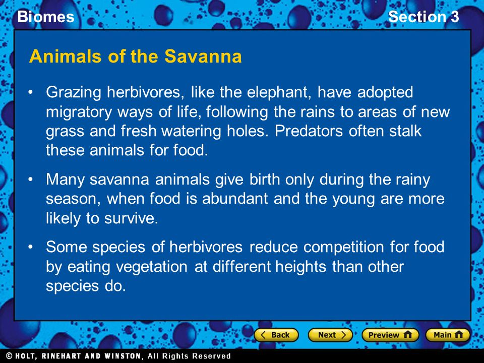 Animals of the Savanna
