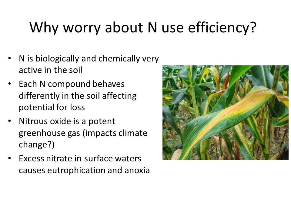 Why worry about N use efficiency