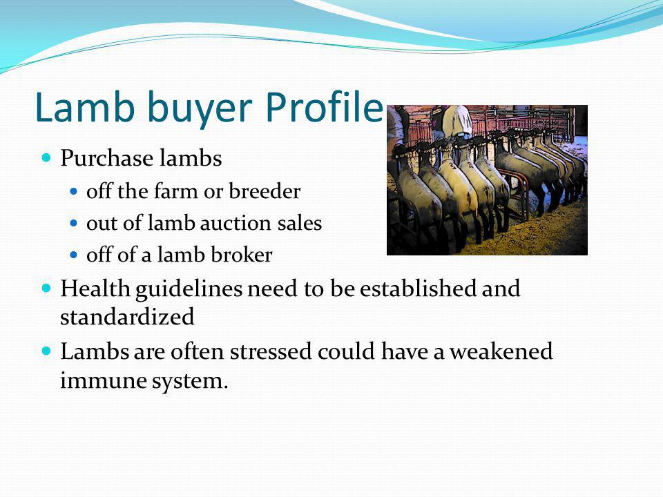 Lamb buyer Profile Purchase lambs